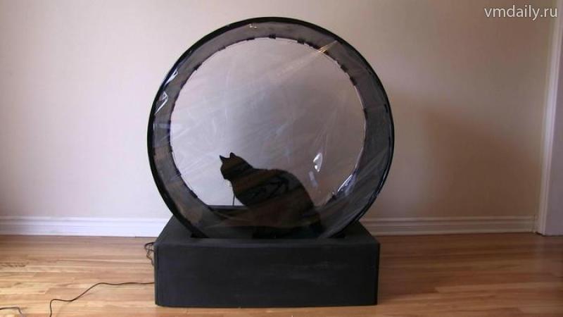 Беговая колесо для кошек своими руками