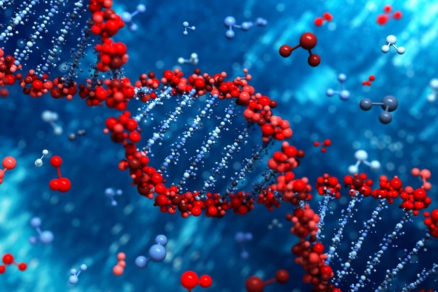 Заменяя ДНК, мыможем «переписать» жизнь человека «как надо»— Ученые