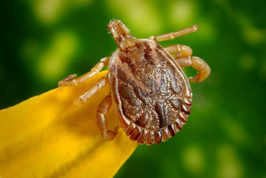 Ученые: Через 50 лет пропадут большинство паразитов напланете из-за потепления