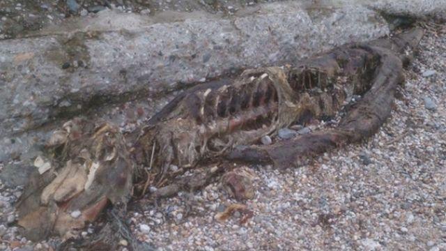 В Великобритании обнаружили таинственного 2,5-метрового змея