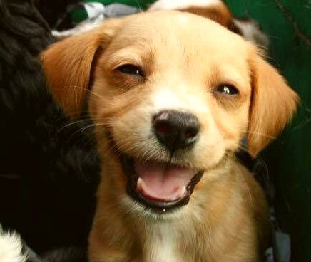 Малыш Котопёс: ученые установили, что в древности собаки были кошками