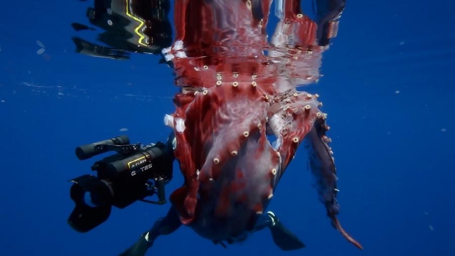 Огромный «осьминог-убийца»: английские СМИ поведали про «секретное оружие России»