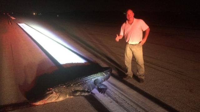 200-килограммовый аллигатор столкнулся ссамолетом вОрландо