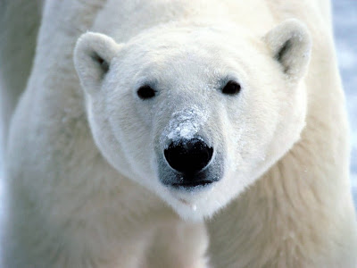 Белый медведь, гладящий поголове собаку, растрогал Интернет