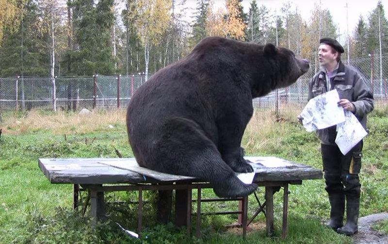 Встолице Финляндии медведь «открыл» выставку собственных картин