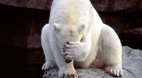 Самого грустного вмире белого медведя навремя убрали изкитайскогоТЦ