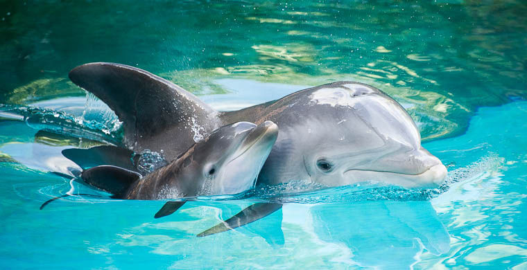 Учёные сообщили, что дельфины погибают из-за контакта слюдьми