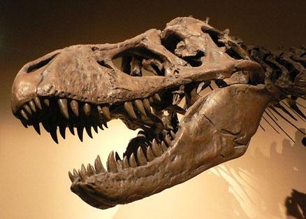 ВКитайской народной республике найдены окаменелости птицеподобного динозавра