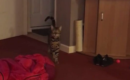 Поющий кот Максимус подорвал соцсети