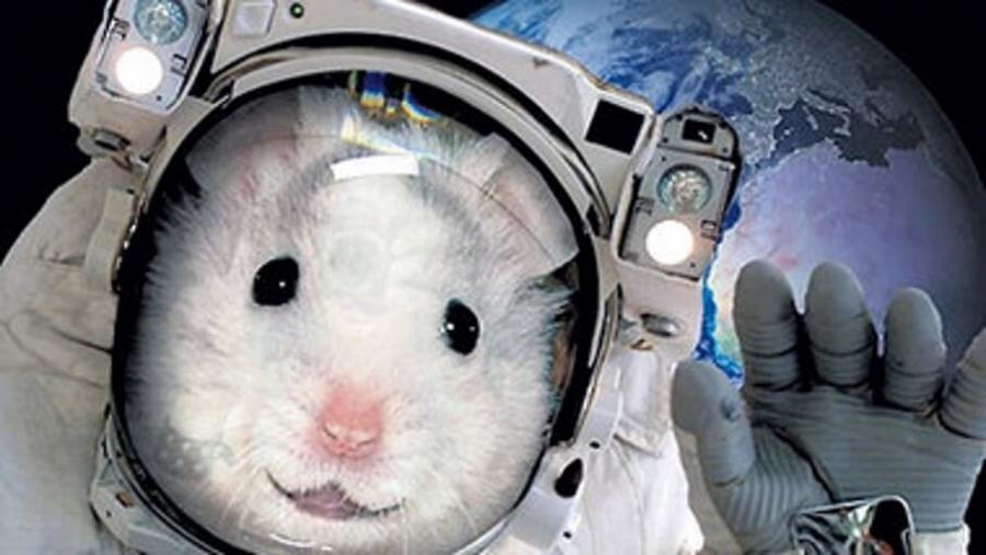 Состояние мышей вкосмосе проверят русские иамериканские ученые