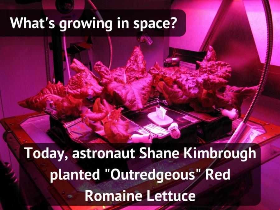 Астронавты NASA научились растить салат вкосмосе